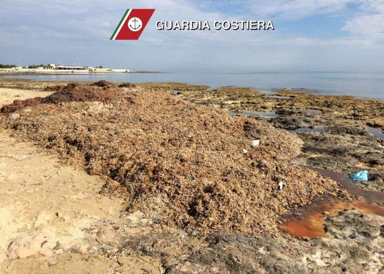 Sposta la posidonia dal suo stabilimento balneare alla spiaggia accanto: multato gestore