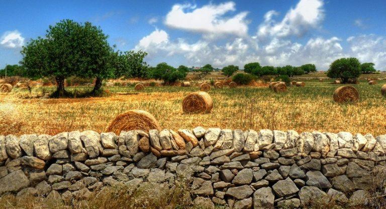 Lavorare in sinergia: nasce Assogal, l'associazione che riunisce tutti i Gal di Puglia