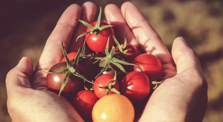 """Alla scoperta dei tesori dell'agroalimentare con """"Sa' Puglia – Sapere per gustare"""", il nuovo progetto del GAL Alto Salento"""
