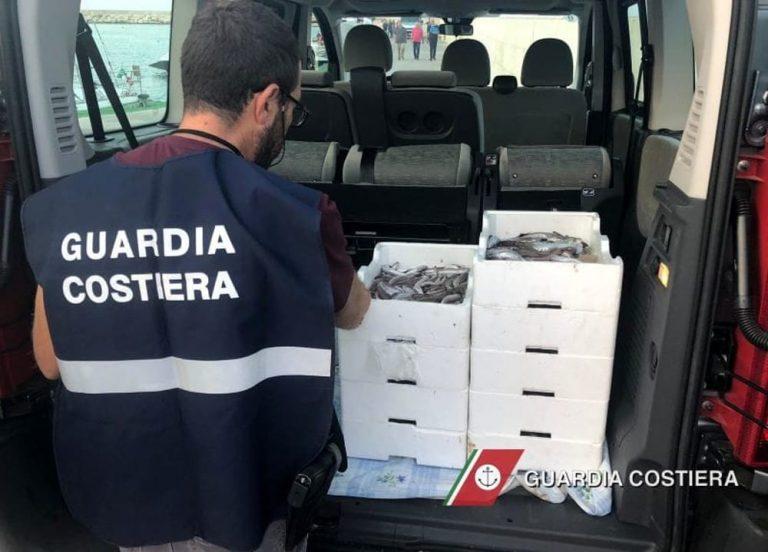 Blitz della Capitaneria di Porto a Savelletri: sequestrati oltre tre quintali di pesce