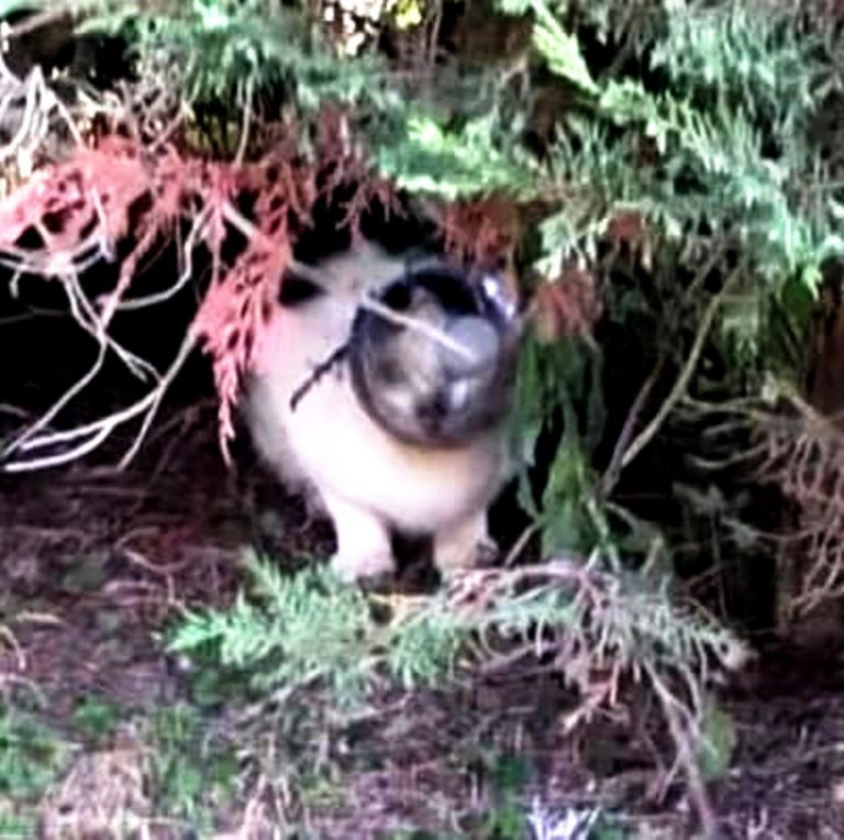 Gatto con la testa incastrata in una bottiglia, l'appello degli animalisti ostunesi: «Aiutateci ad aiutarlo»