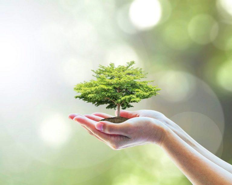 Un albero per ogni neonato: il Comune di Ostuni dispone la messa a dimora di 250 esemplari