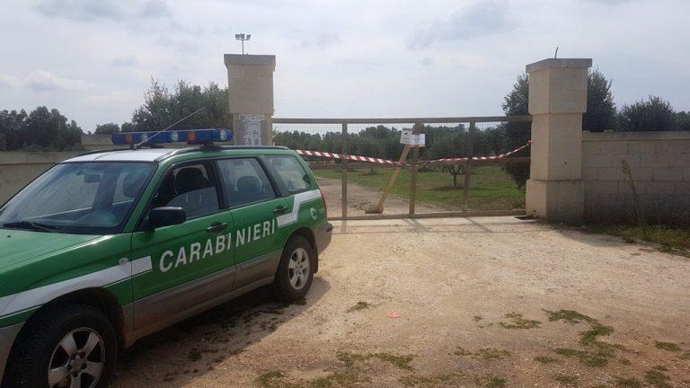 Frantoi oleari, controlli a tappeto dei Forestali: cinque denunciati e cinque strutture sequestrate