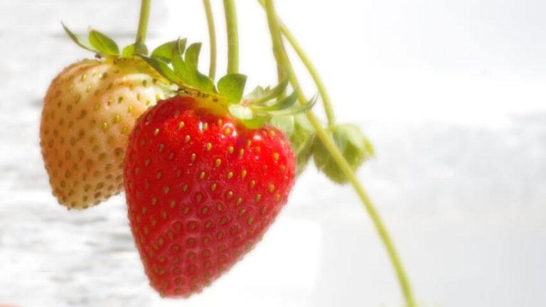 Fragole: qualità nutrizionali